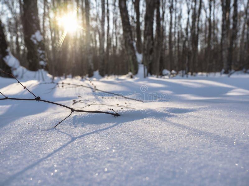 Идите снег в лесе в лучах солнца зимы стоковое изображение rf