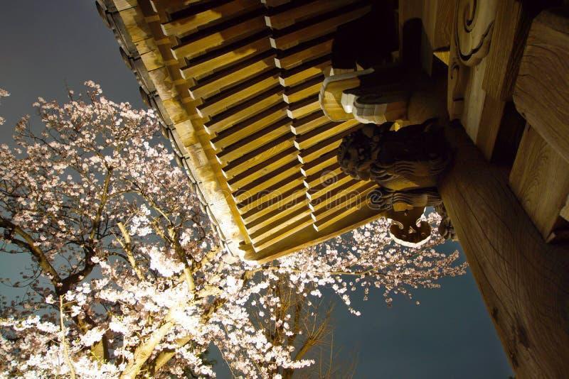 идти увидеть гору Takamichi вишневых цветов вечером стоковые изображения rf