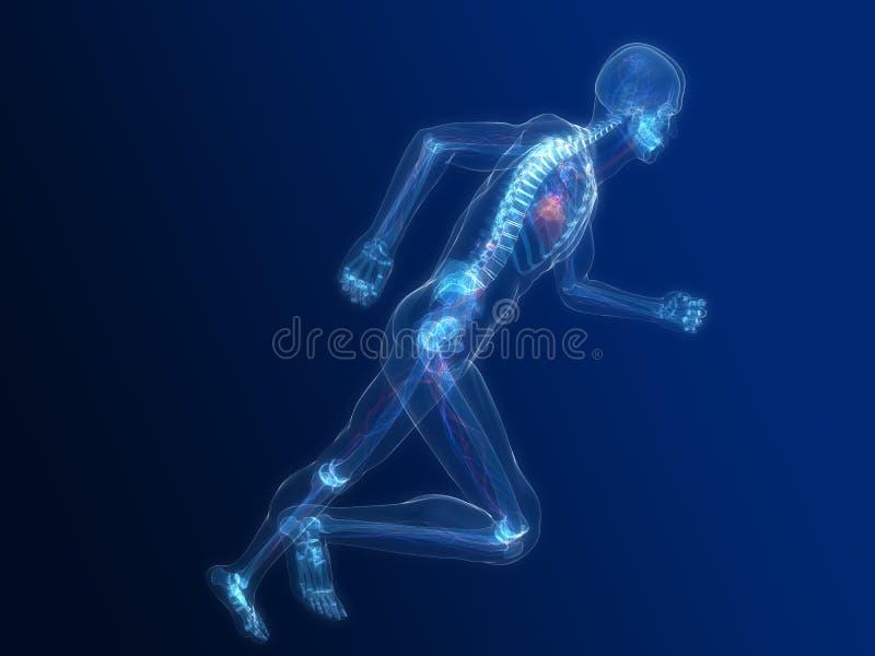 идущая каркасная система васкулярная бесплатная иллюстрация