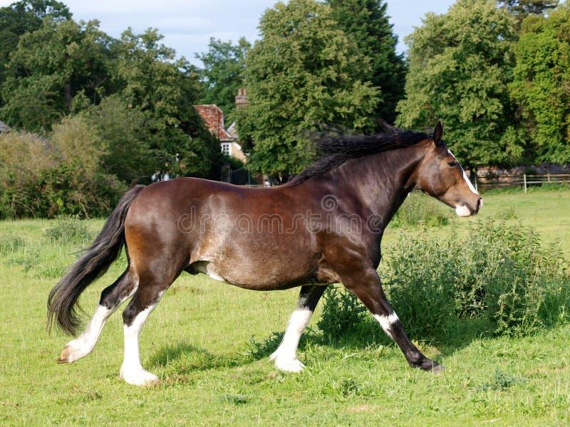 Идущая лошадь стоковое фото