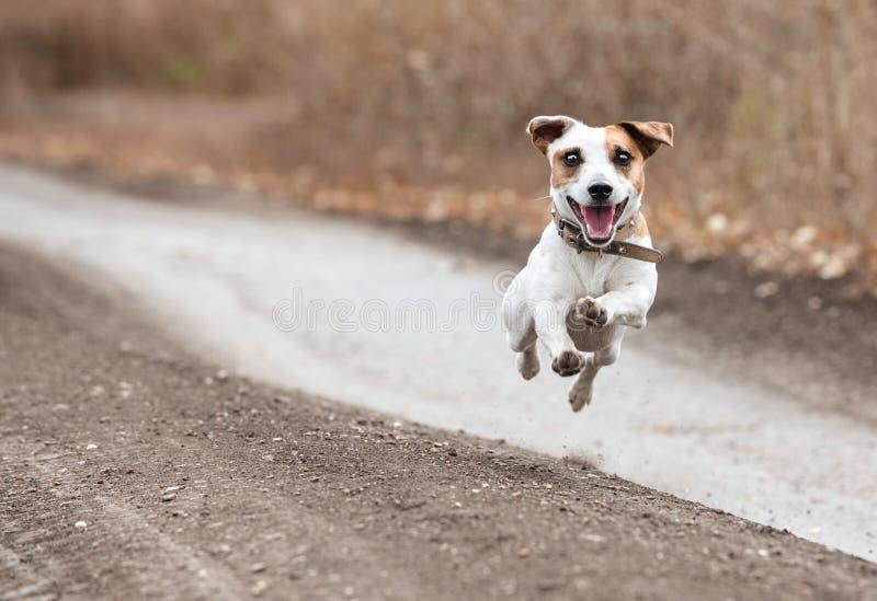 Идущая собака в осени стоковая фотография