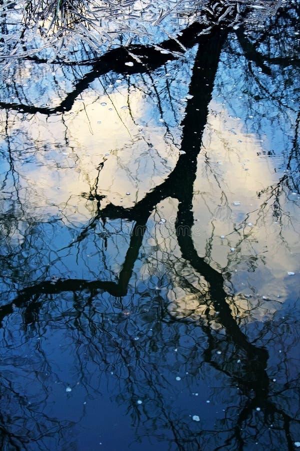 Идущие тени дерева формы на воде стоковые фотографии rf