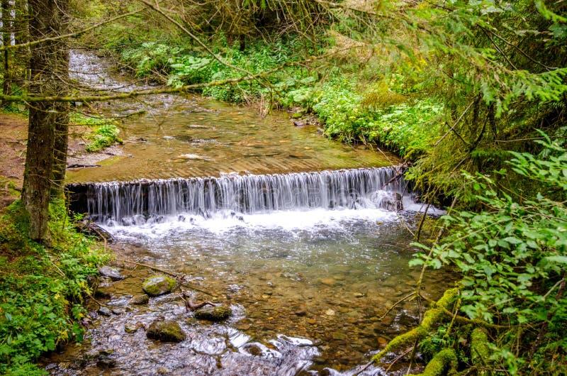 Идущий поток в природе стоковое изображение