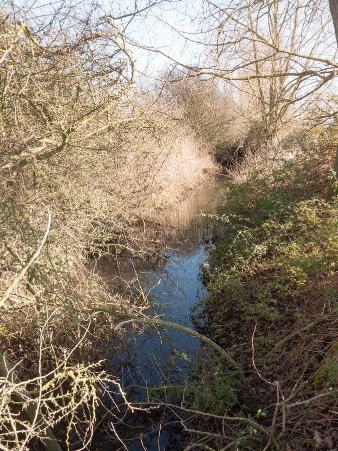 идущий поток через сельскую местность под деревьями, который нужно встать на сторону чуть-чуть весна стоковая фотография rf