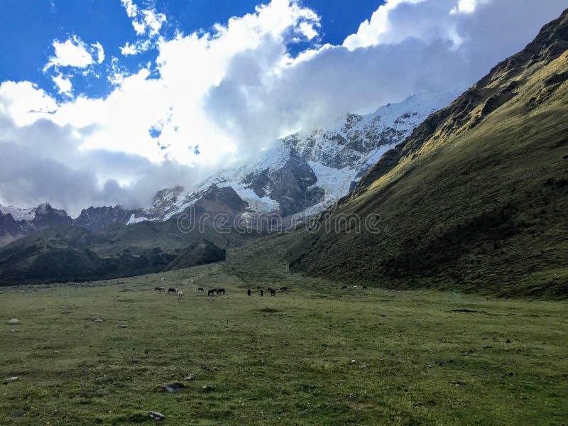 Идущ через открытую долину вдоль следа Salkantay на пути к Machu Picchu, Перу красивейше стоковые изображения rf