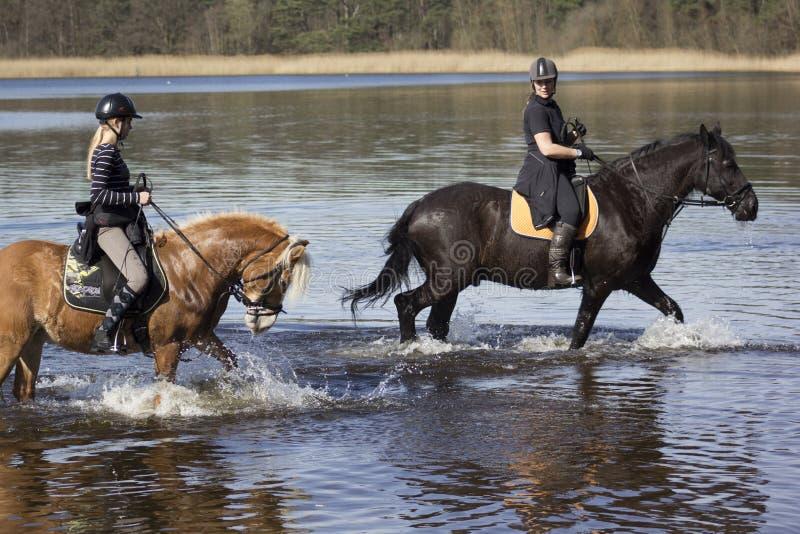 2 идя лошади стоковое изображение rf