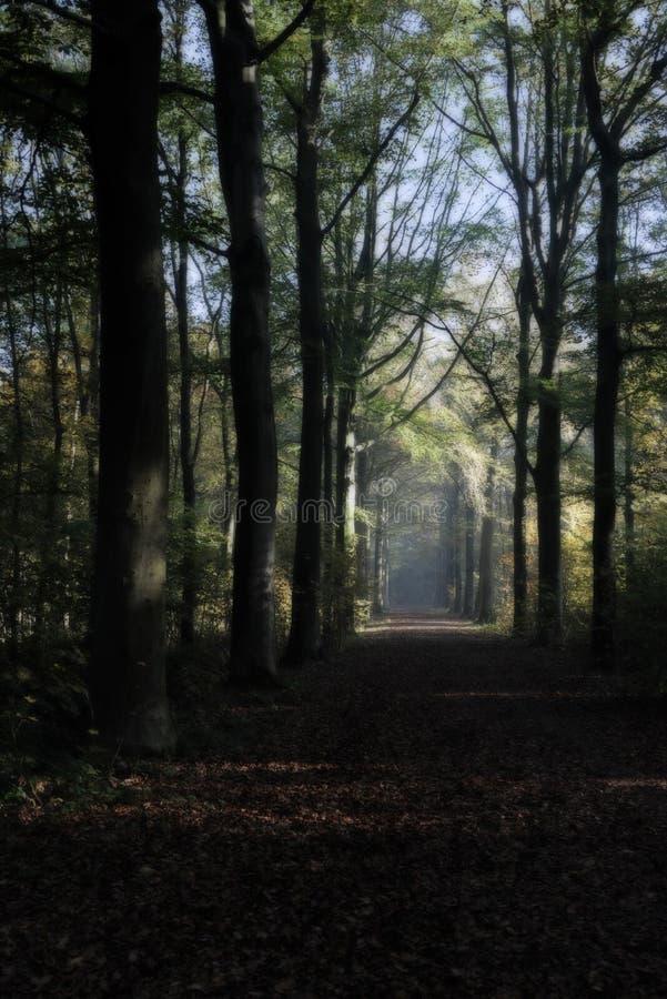 Идя путь в forrest с солнцем утра стоковое фото