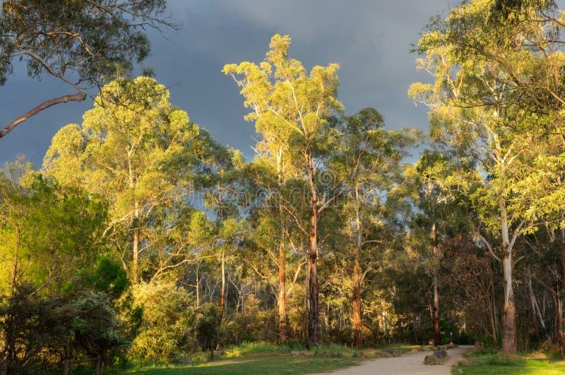 Идя след вдоль реки Yarra в Warrandtye в Мельбурне, Австралии стоковые фотографии rf