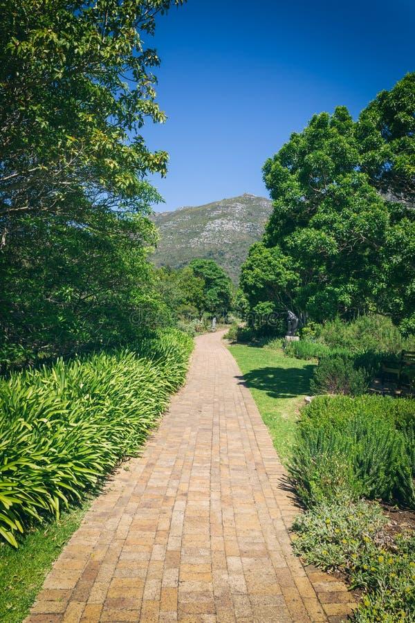 Идя след в саде Kirstenbosch ботаническом, Кейптауне стоковые изображения