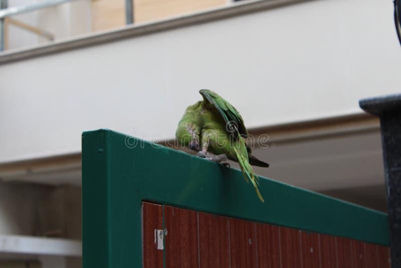 Избежание ` s попугая стоковые фото