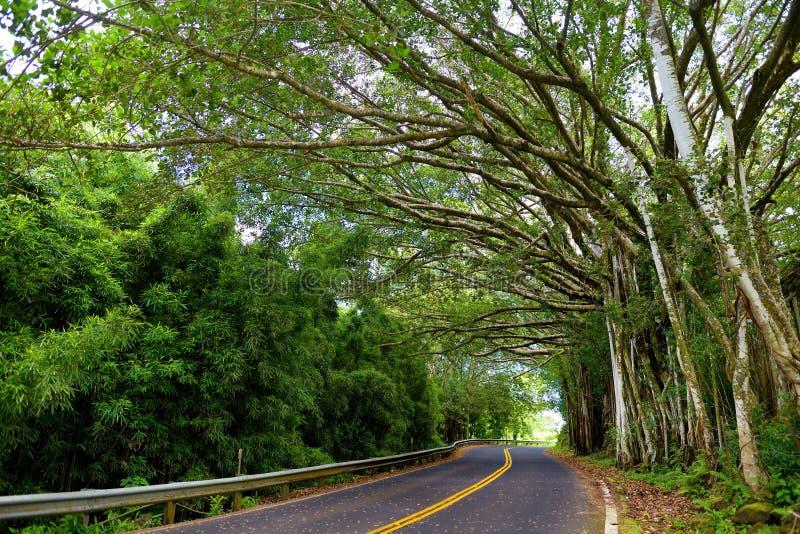 Известная дорога к Гане чреватой с узкими мостами одн-майны, поворотами hairpin и неимоверными взглядами острова, Мауи, Гаваи стоковые изображения
