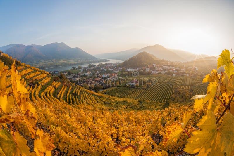 Известные виноградники в Wachau, шпице, Австрии стоковые фото