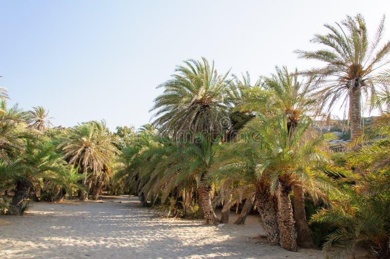 Известный Palm Beach Vai, острова Крита, Греции стоковое изображение rf