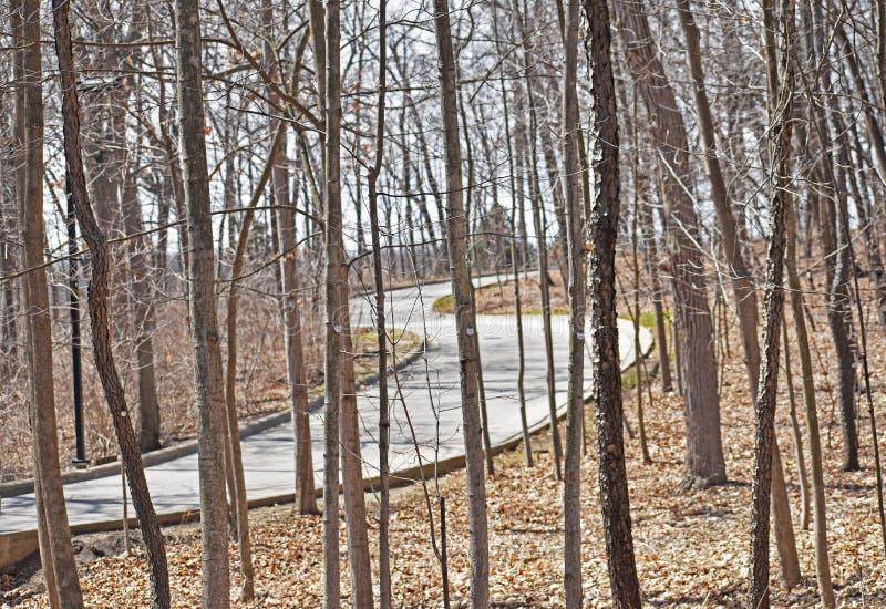 Извилистая дорога через лес стоковое изображение