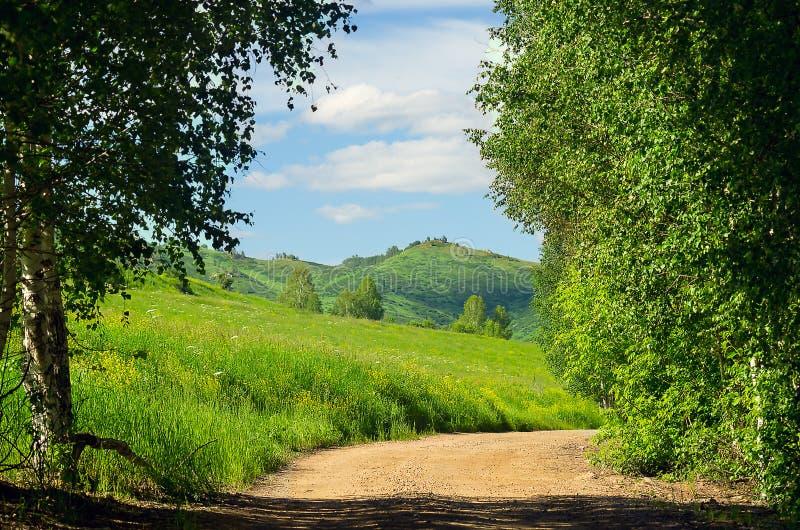 Извилистая трасса Highland Road с деревьями Grasses Hillside и Birch Trees вдоль дороги в жаркий летний день стоковые фотографии rf