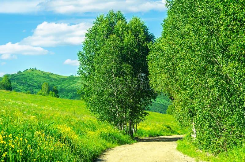 Извилистая трасса Highland Road с деревьями Grasses Hillside и Birch Trees вдоль дороги в жаркий летний день стоковая фотография rf