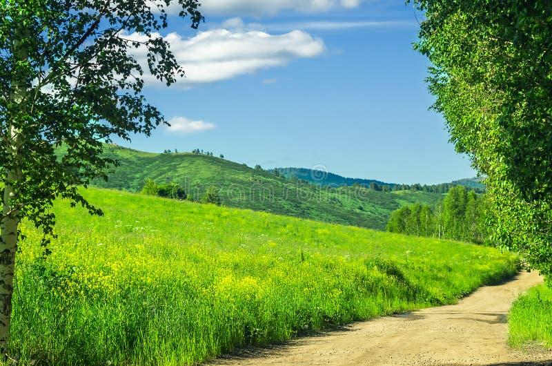 Извилистая трасса Highland Road с деревьями Grasses Hillside и Birch Trees вдоль дороги в жаркий летний день стоковые фото