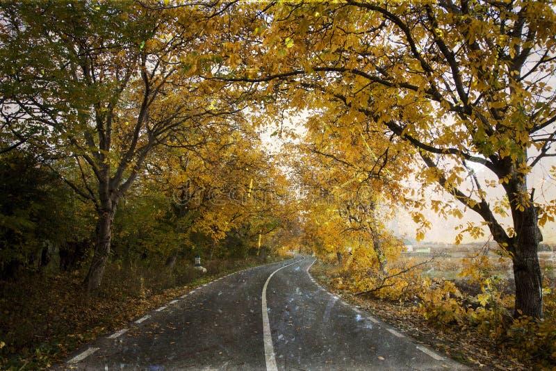 Изгибать дорогу в пуще осени стоковое фото