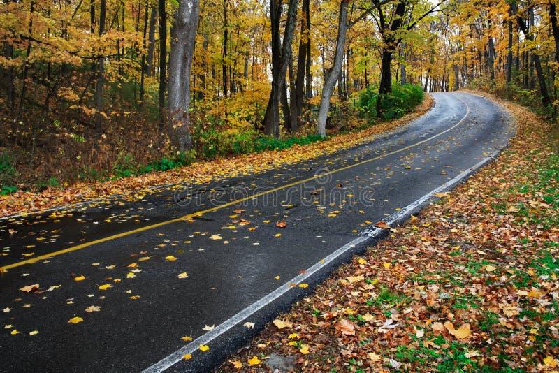 Дорога парка в осени стоковое фото