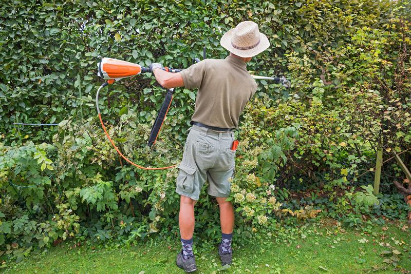 Изгородь бука утески садовника длинные клиперы изгороди с батареей стоковые фотографии rf
