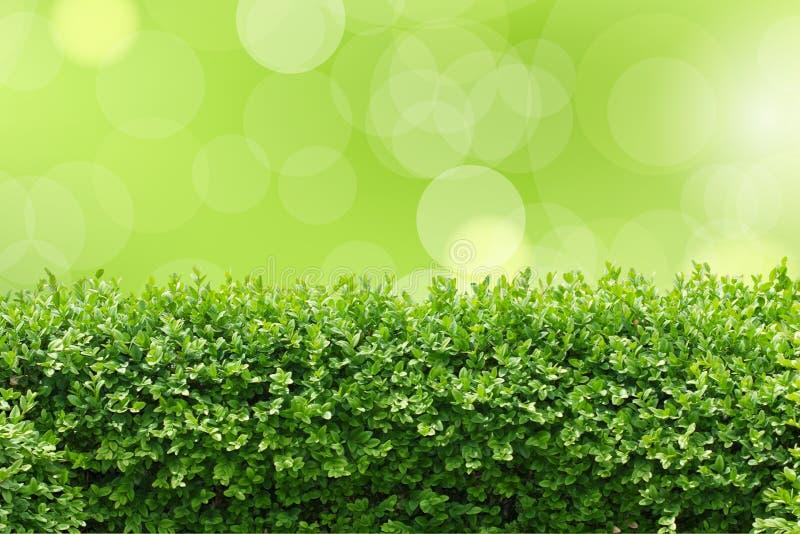 Изгородь сада стоковые фотографии rf