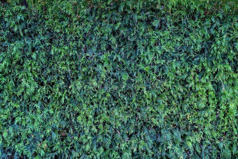 изгородь стоковое изображение rf