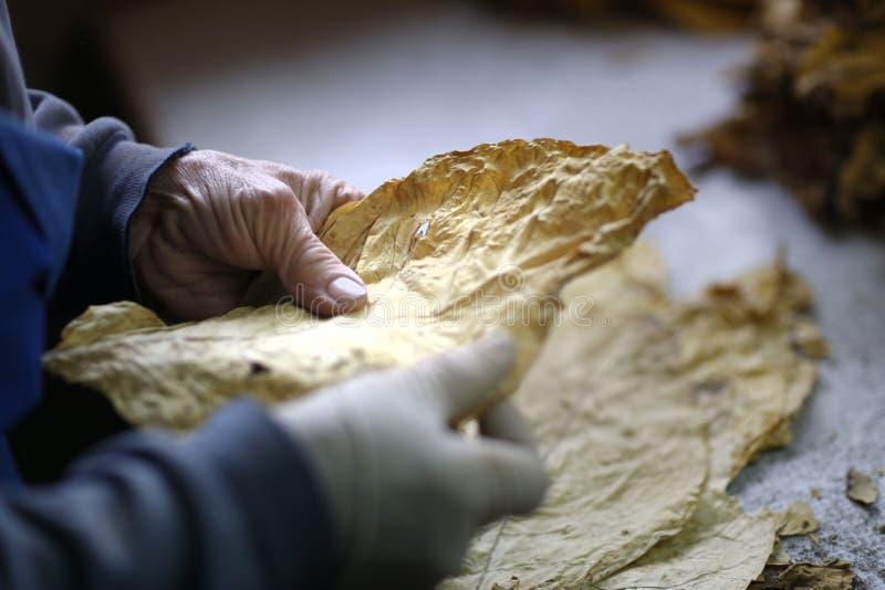 Изготовление табака стоковые фото
