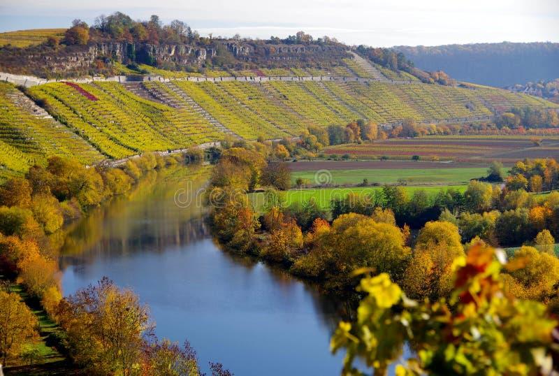 Излучина реки с большими цветами осени на банке и в винограднике стоковое изображение