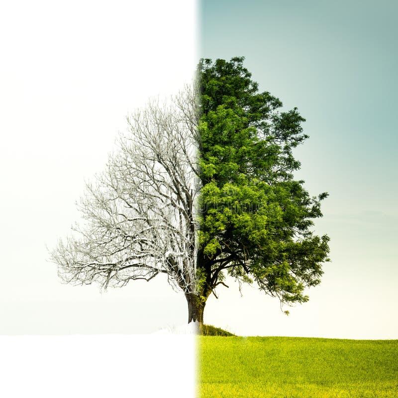 тому, дерево зимой летом на одной картинке наряду технологичными