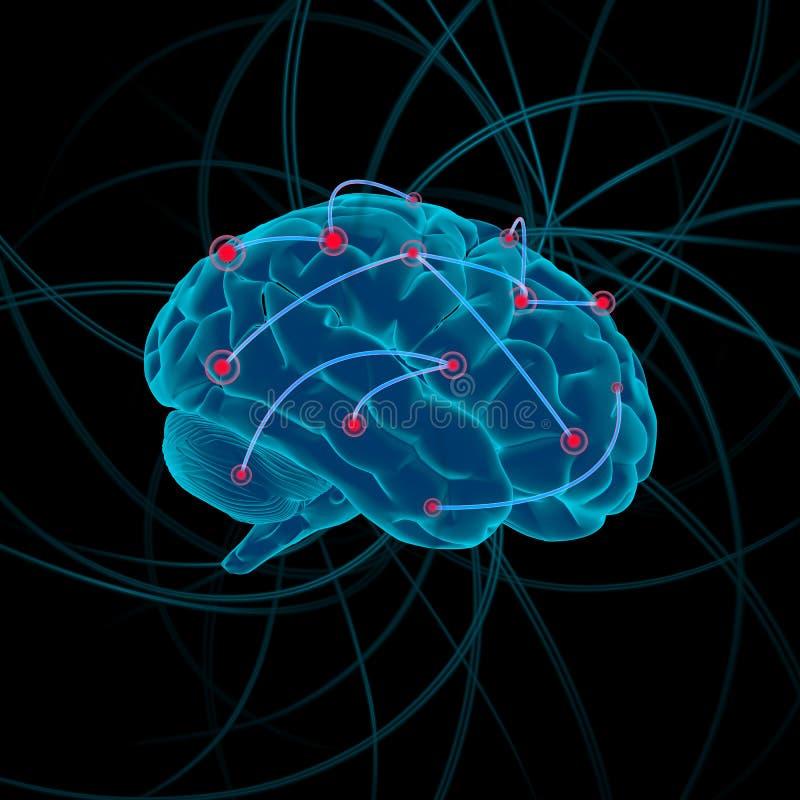 изменение иллюстрации цвета 4 bw мозга стоковая фотография rf