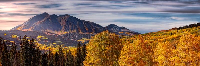 Изменение цвета деревьев осенью стоковые фото