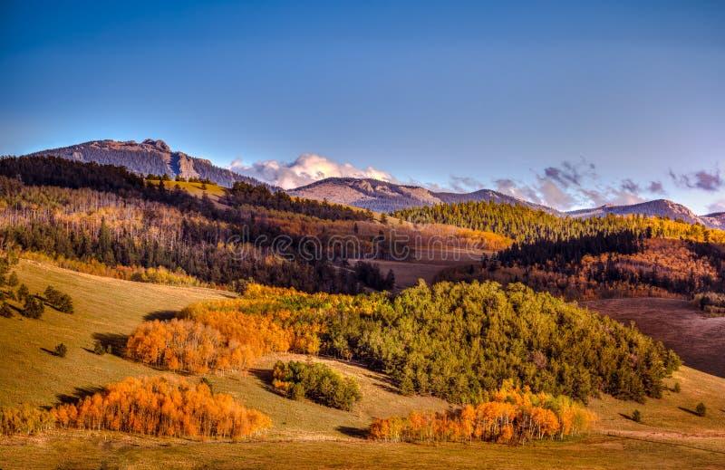Изменение цвета деревьев осенью стоковые фотографии rf