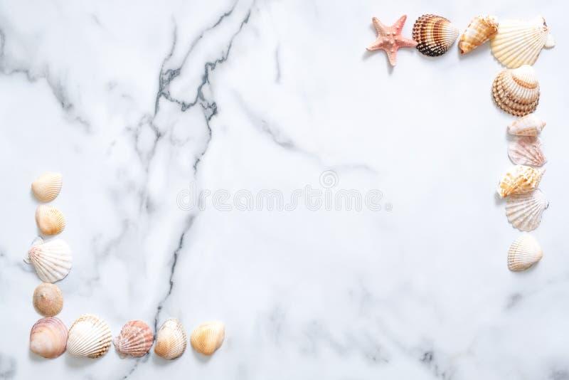 измените лето иллюстрации цветастого состава цветов легкое для того чтобы vector Рамка сделанная раковин моря на мраморной предпо стоковое изображение