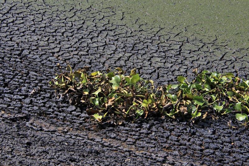 Изменять климата - сухая почва и умирая заводы стоковое изображение rf
