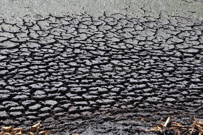 Изменять климата - сухая почва и умирая заводы стоковые изображения rf
