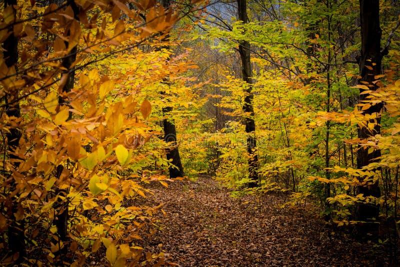 Изменяя листья стоковые изображения