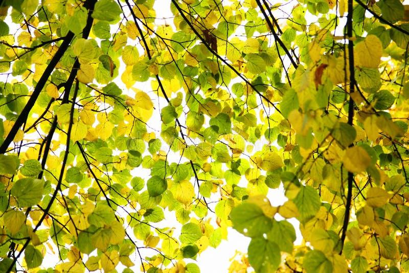 изменяя листья стоковая фотография rf