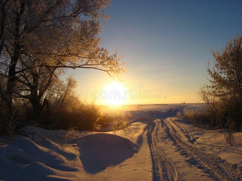 Изморозь рано утром стоковое изображение rf