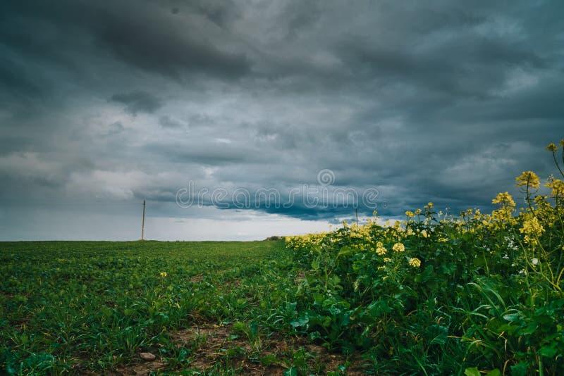 Изнасилованное и горчичное сельскохозяйственное поле с грозовыми облаками выше Осень в Европе стоковая фотография