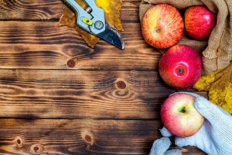 Изобилие сбора падения Выбирать красные яблока стоковое изображение