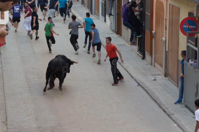 Изображение быка на улице стоковые изображения