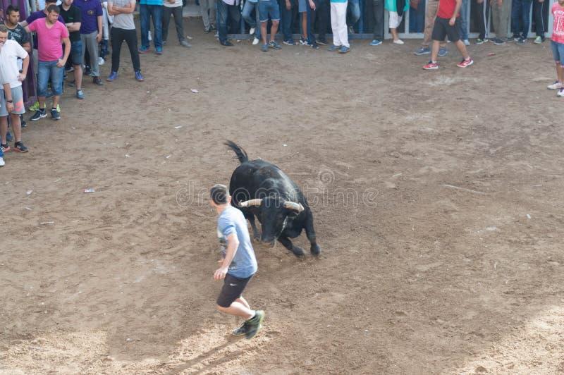 Изображение быка на улице стоковые фотографии rf
