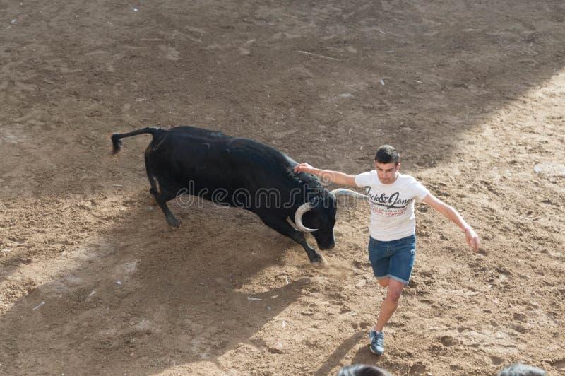 Изображение быка на улице стоковое фото rf