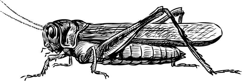 Кузнечик иллюстрация вектора