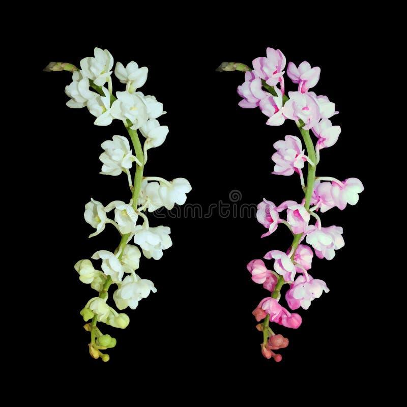 Изображение вектора цветка орхидеи бесплатная иллюстрация