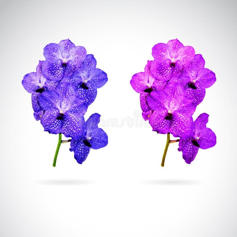 Изображение вектора цветка орхидеи иллюстрация вектора
