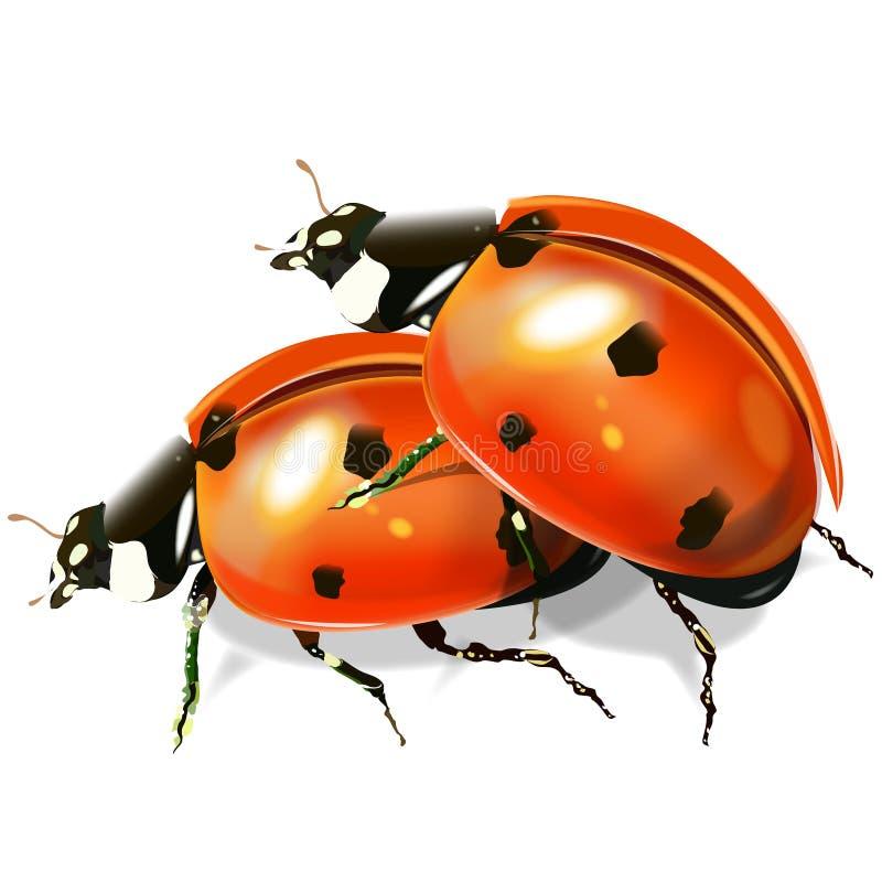 Изображение вектора ladybirds бесплатная иллюстрация