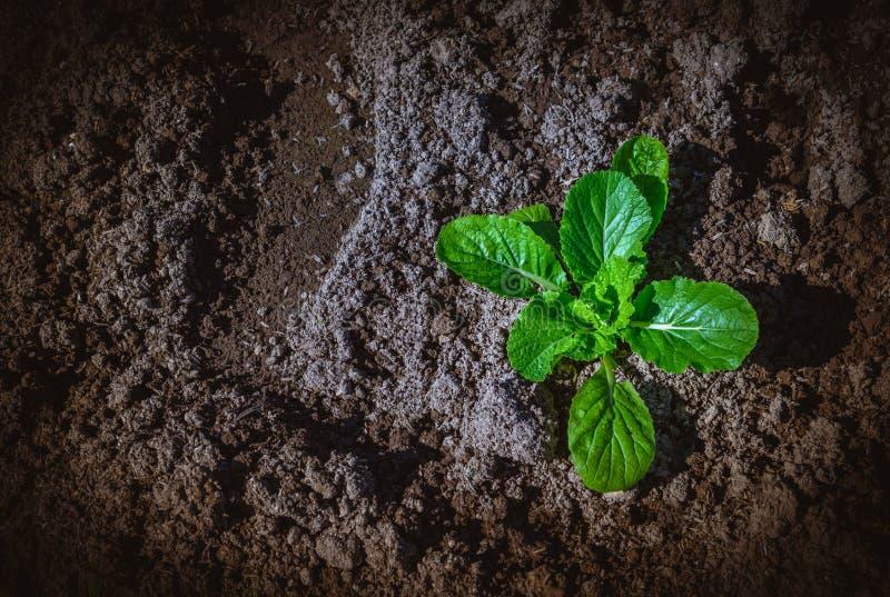 Изображение взгляд сверху зеленого овоща в поле стоковые фотографии rf