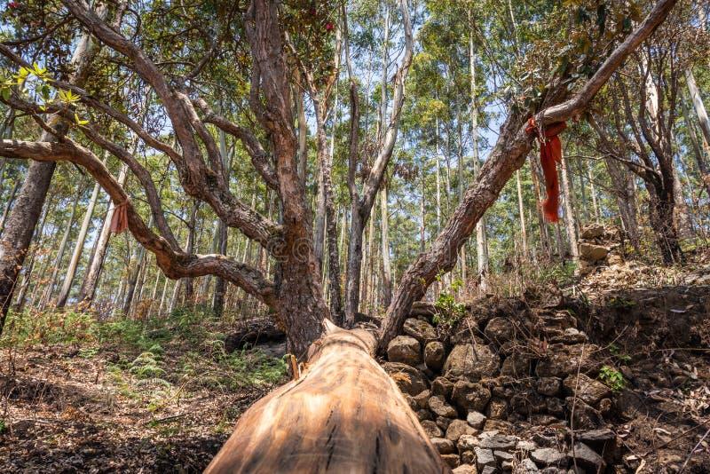 Изображение вырезывания дерева с зеленой предпосылкой леса стоковое изображение