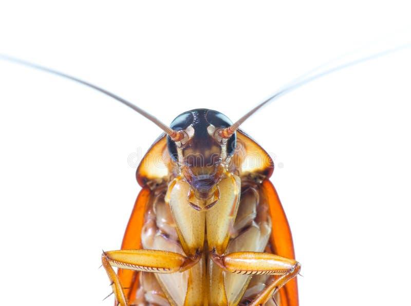 Изображение действия тараканов, стоковая фотография